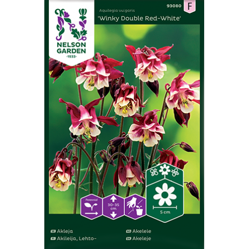 Akleja-'winky double red-white' -  aquilegia vulgaris