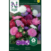 Aster-dwarf chrysanthemum mix -  callistephus chinensis